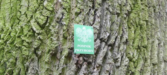 PTP zrealizowało projekt inwentaryzacji i znakowania drzew pomnikowych w gminie Rzeczyca.